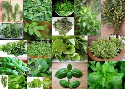 علاج حساسية الصدر بالاعشاب