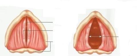 Photo of التهاب الحنجرة – علاج التهاب الحنجرة واسبابه