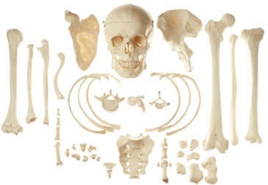 أهم الطرق المتبعة للحفاظ على صحة العظام وسلامتها