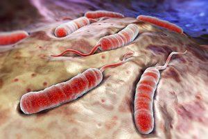 تاريخ مرض الكوليرا
