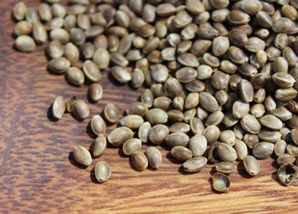 القيمة الغذائية لبذور القنب