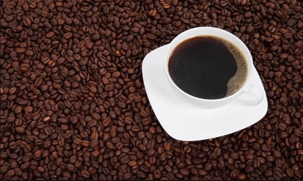 اصل بذور القهوة