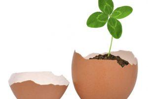 فوائد قشر البيض