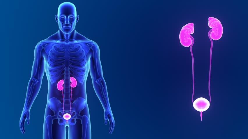كيفية علاج التبول اللاإرادي بالطب