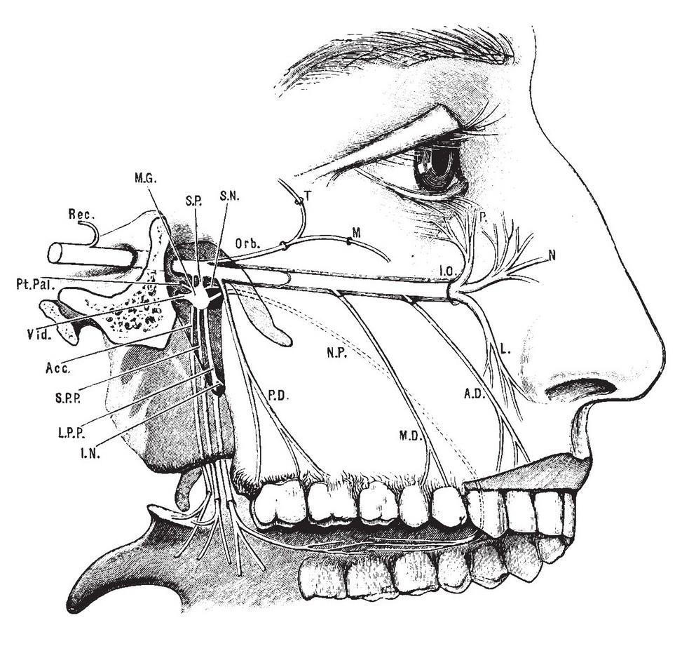 شلل الوجه العصبي شلل بل