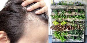 علاج الثعلبة بالاعشاب