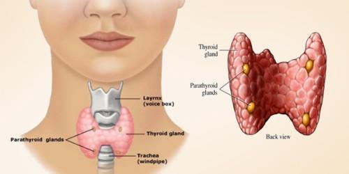 أسباب زيادة افراز هرمون الغدة الدرقية