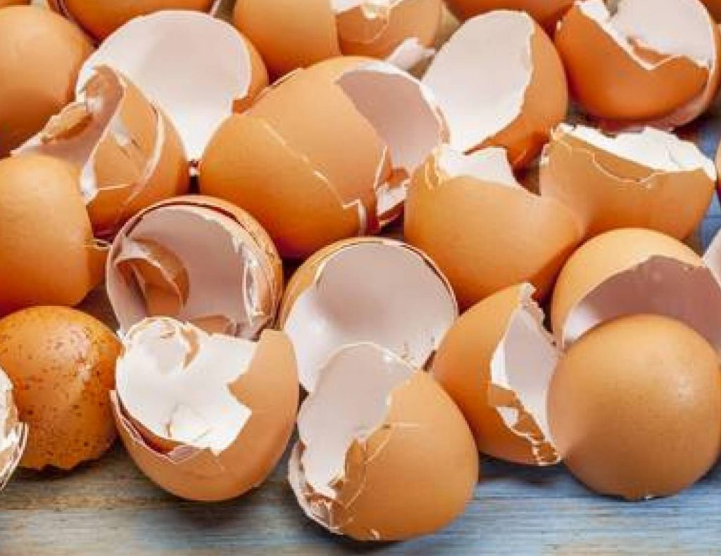 فوائد قشر البيض للرجال