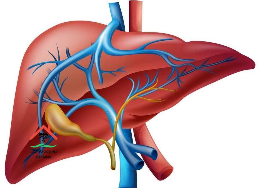 علاج ارتفاع إنزيمات الكبد وأهم الأسباب التي تؤدي إليه حتى نتجنبها