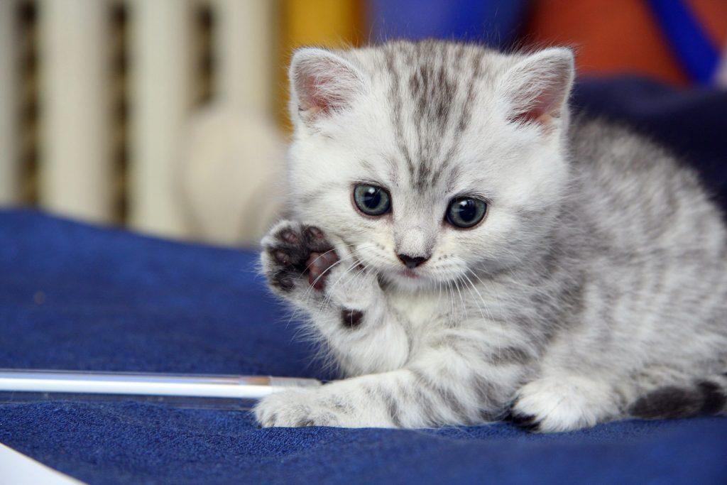 علاج الاسهال عند القطط