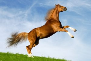 الجرب عند الخيول اسبابه وعلاجهScabies