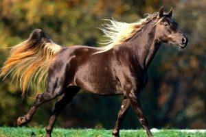 الكزاز عند الخيول وعلاجه وما هي الاعراض المصاحبة للمرض