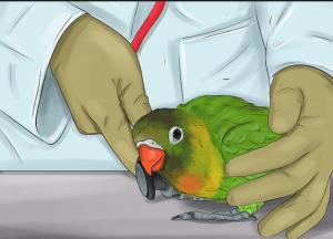 الاسهال عند الطيور وعلاجه