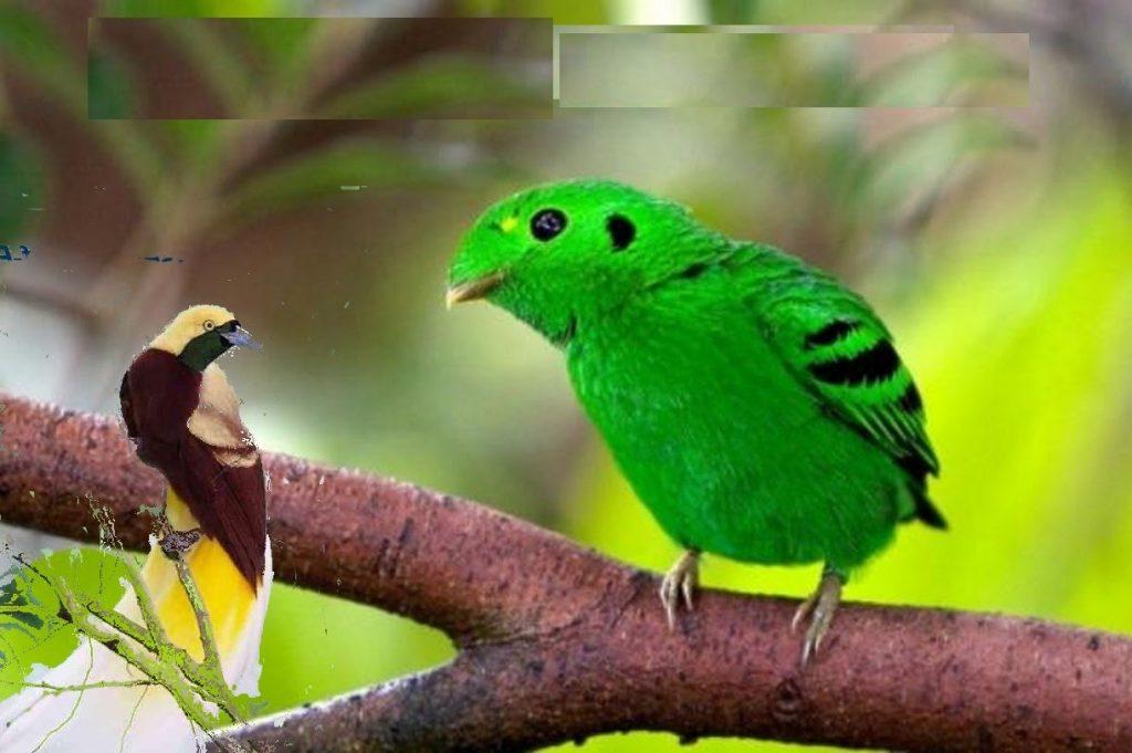 أنواع طيور الزينة وأشكالها