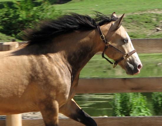 الكزاز عند الخيول وعلاجه