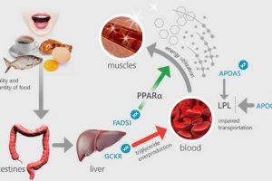 الدهون الثلاثية وتحليل الدهون الثلاثية
