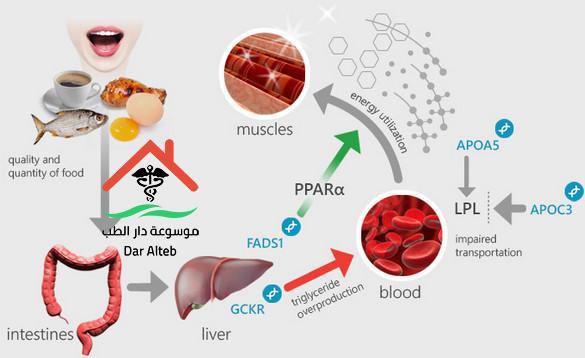 Photo of الدهون الثلاثية تحليل الدهون الثلاثية