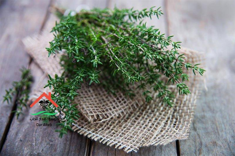 Photo of اعشاب لعلاج الكحة بالزعتر والعرقسوس وامراض الجهاز التنفسي