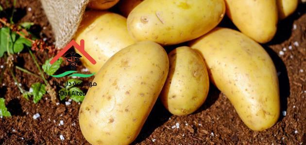 Photo of أضرار البطاطس على الصحة الرجيم