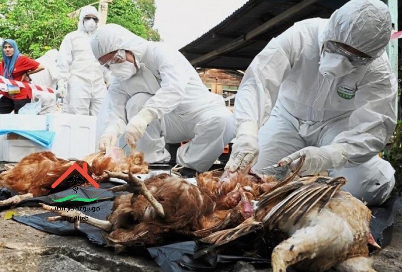 Photo of أعراض إنفلونزا الطيور وطرق الوقاية منها