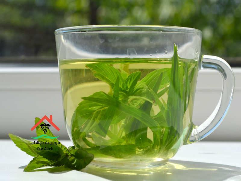 Photo of ما هي فوائد الشاي الأخضر .. تعرف على جميع الفوائد التي تجنيها من شرب الشاي الأخضر
