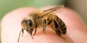 فوائد سم النحل وطريقة الاستخدام