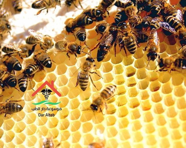 بحث عن عالم النحل