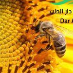 بحث حول مجتمع النحل