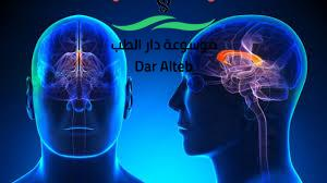 Photo of اعراض زيادة كهرباء المخ وطرق العلاج