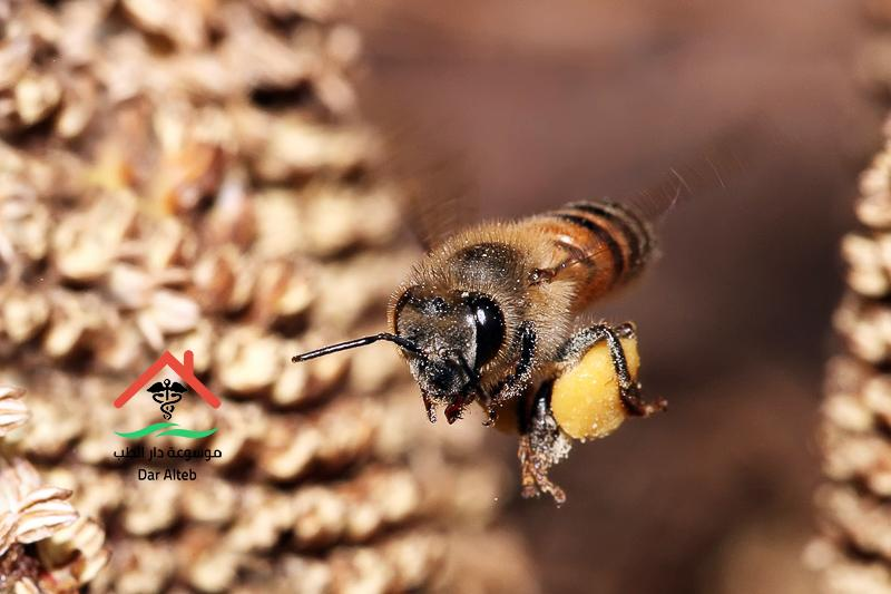 Photo of انواع النحل وأهم اعداء النحل
