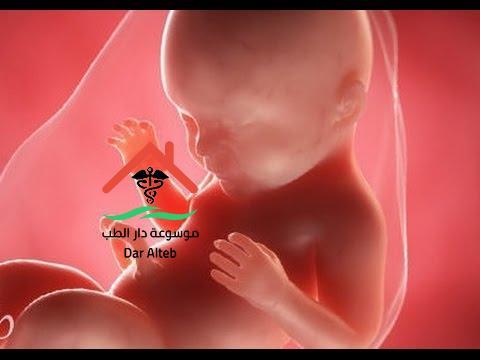 مراحل تكوين الجنين بالصور