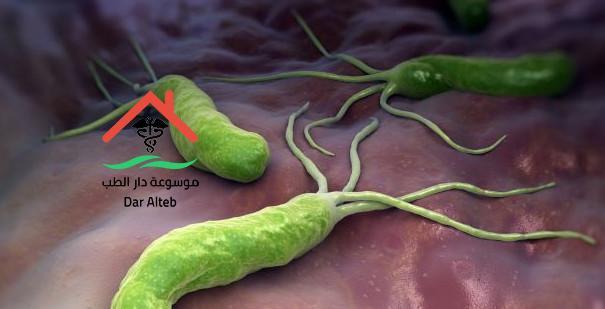 الميكروب الحلزونى