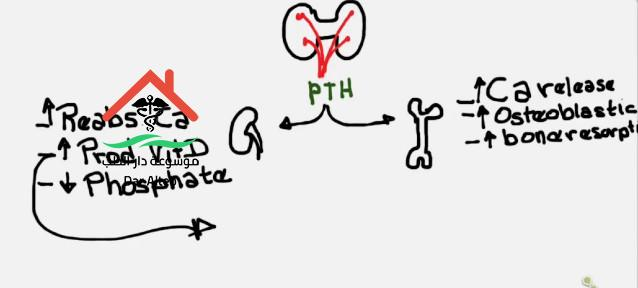 تحليل pth