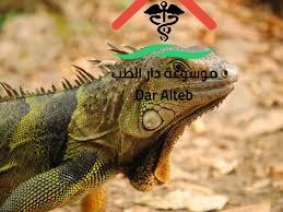 Photo of بحث عن الزواحف جاهز للطباعه