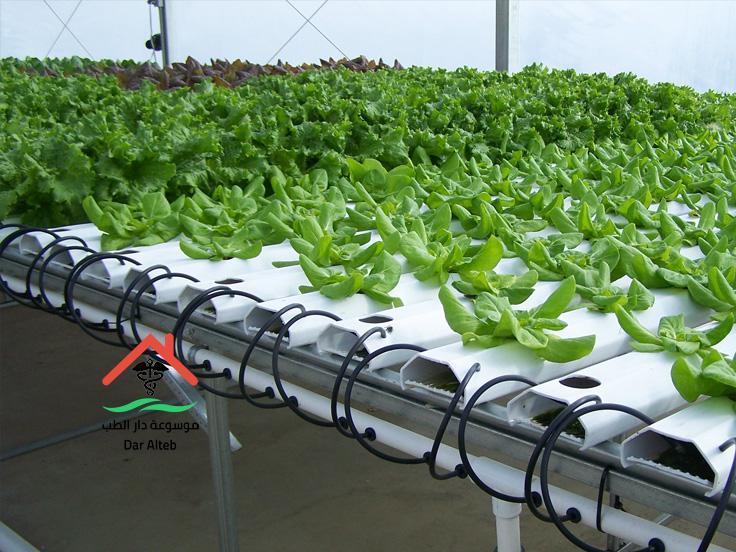 Photo of الزراعة المائية بالطرق المبتكرة