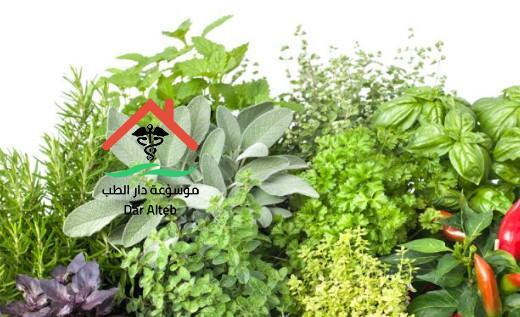 علاج الحمى المالطية بالاعشاب